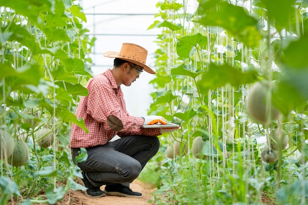 Rolnik melon, inteligentne rolnictwo, przy użyciu nowoczesnych technologii w rolnictwie. mężczyzna rolnik agronom z laptopem w gospodarstwie kantalupa.