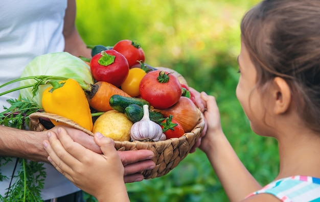 Rolnik mężczyzna trzyma w rękach warzywa i dziecko. selektywne skupienie. żywność.