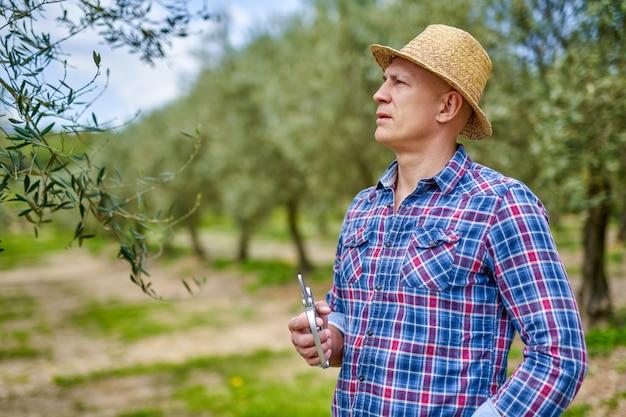 Rolnik mężczyzna w słomkowym kapeluszu sprawdza plantację oliwek.