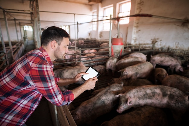 Rolnik na fermie trzody chlewnej za pomocą nowoczesnej aplikacji na swoim tablecie do sprawdzania stanu zdrowia świń i racji żywieniowych