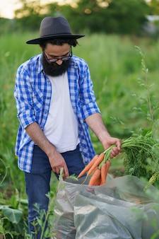 Rolnik napełnia plastikowe worki świeżą marchewką w ogrodzie, pomarańczowymi korzeniami, zielonymi liśćmi, świeżymi warzywami, zdrową żywnością i witaminami