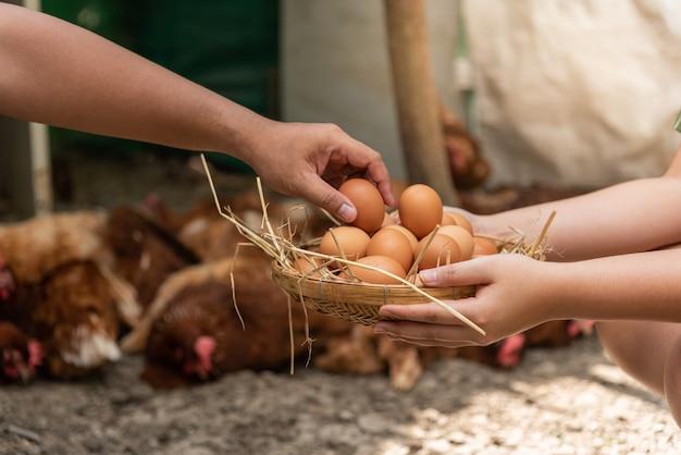Rolnik pomaga zbierać świeże produkty jajeczne załóż bambusowy kosz.