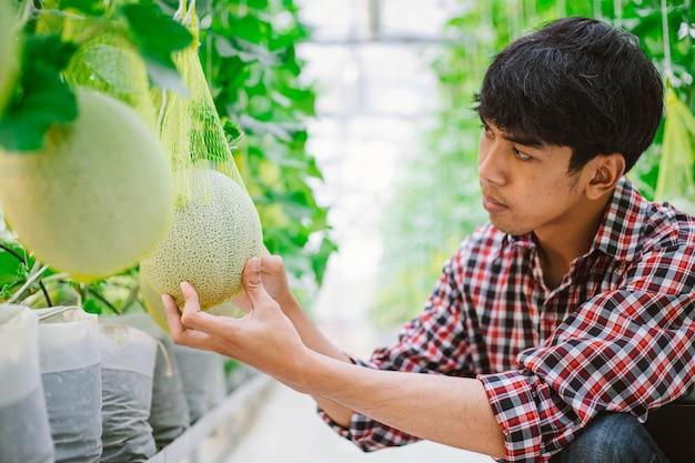 Rolnik posiadający melona w gospodarstwie melonów w plastikowym domu