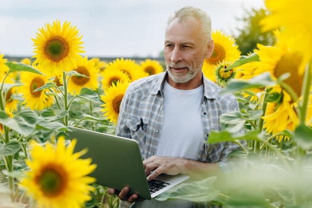 Rolnik pracuje na laptopie w polu słoneczników