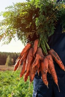 Rolnik ręce w rękawiczkach trzymający pęczek marchewki