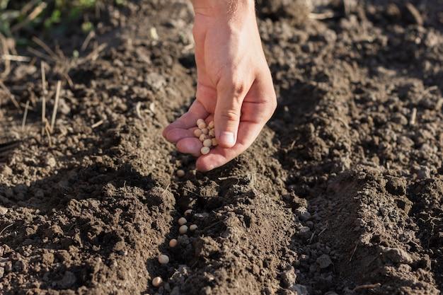 Rolnik sadzący nasiona warzyw