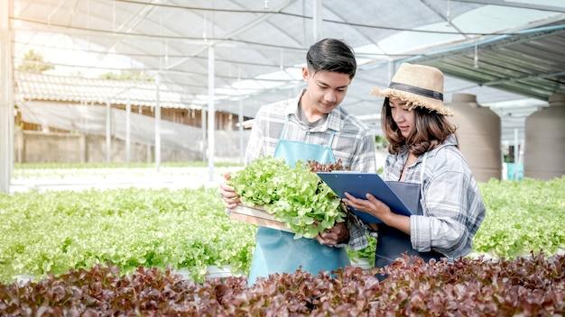 Rolnik sprawdza jakość ekologicznej sałaty warzywnej i sałaty z upraw hydroponicznych i robi notatki w schowku