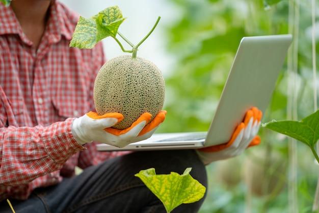 Rolnik sprawdzić jakość melona w szklarni, kantalupa, świeży melon w dłoni na drzewie.