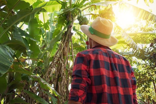Rolnik stojący przed plantacją bananowców w słoneczny dzień. portret rolnika na gruntach rolnych.