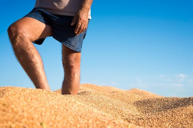 Rolnik stojący w kupie pszenicy w przyczepie