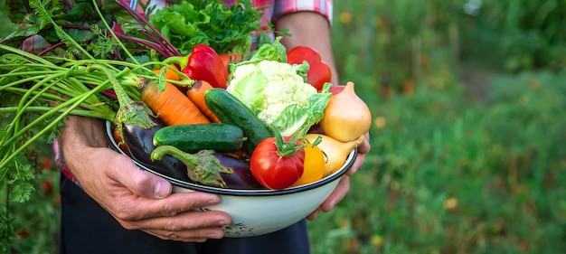 Rolnik trzyma w rękach zbiory warzyw