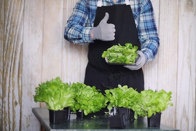 Rolnik uprawia świeże liście sałaty do przygotowania smacznych potraw