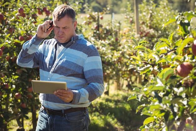 Rolnik używa cyfrową pastylkę podczas gdy opowiadający na telefonie komórkowym w jabłczanym sadzie