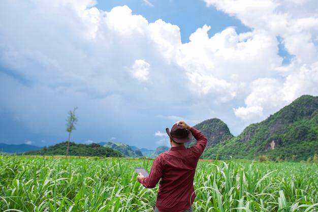 Rolnik używa pastylka komputer sprawdza dane rolnictwo sugarcene