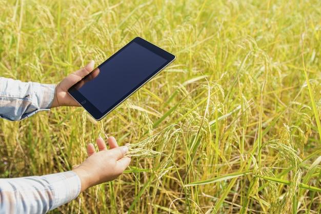 Rolnik używa pastylki technologię sprawdza ryżowego dorośnięcie w gospodarstwie rolnym