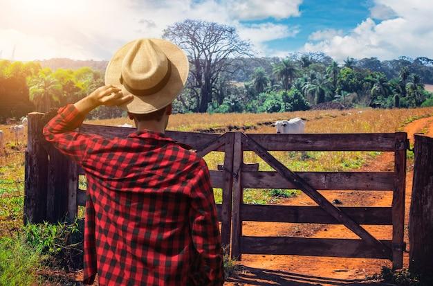 Rolnik w kapeluszu przed grupą krów. pracownik szuka zwierząt na polu.