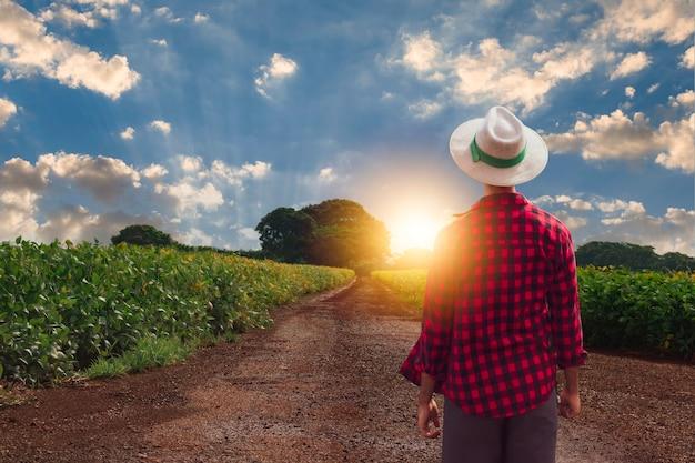 Rolnik w kapeluszu przed plantacją upraw soi. pracownik rolny w polu.