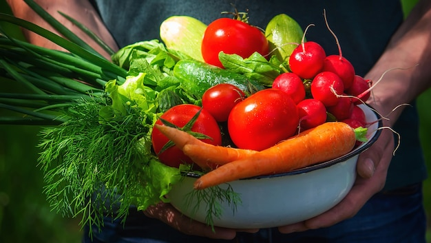 Rolnik w niebieskim ubraniu trzyma w rękach dojrzałe warzywa