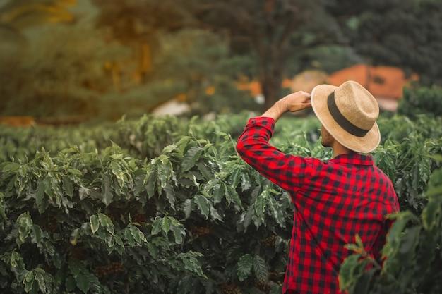Rolnik w polu kawy pszenicy