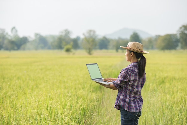 Rolnik w ryżu polu z laptopem