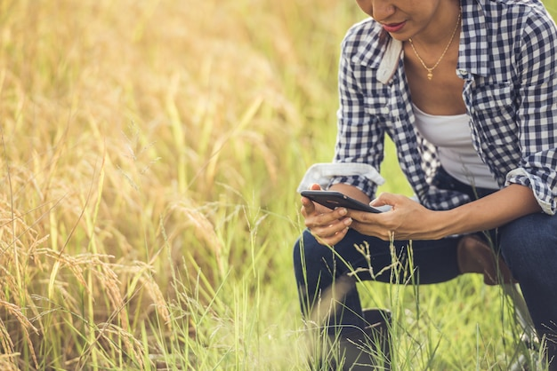 Rolnik w ryżu polu z smartphone