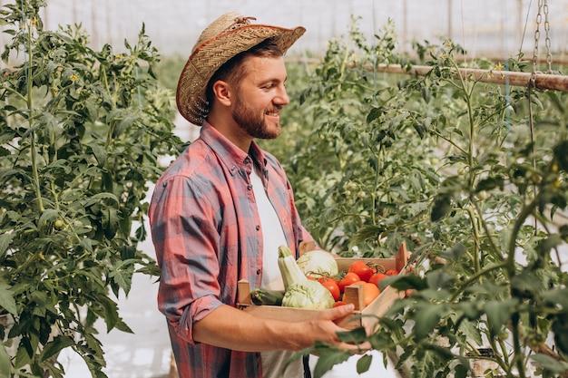 Rolnik w szklarni trzyma pudełko warzyw