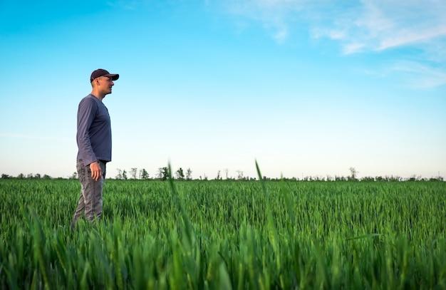 Rolnik w zielonym polu pszenicy.