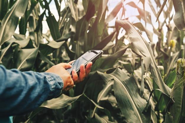 Rolnik wykorzystujący mobilną analizę technologii do sadzenia kukurydzy w gospodarstwie. koncepcja rolnictwa