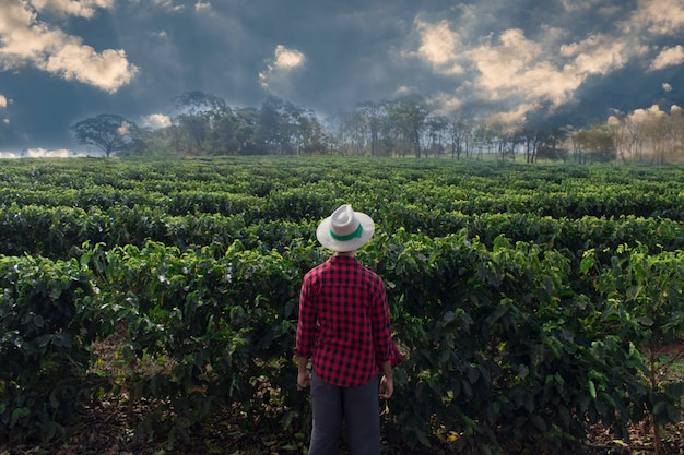 Rolnik z kapeluszem patrząc pole plantacji kawy