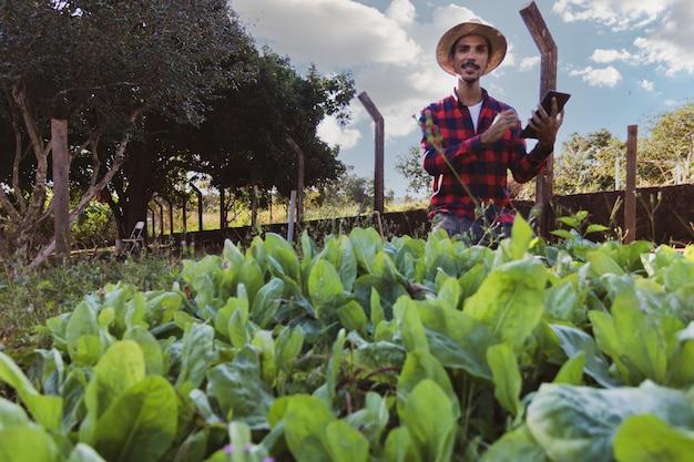 Rolnik z tabletem przed polem sałaty. korzystanie z cyfrowego wsparcia na farmie o zachodzie słońca.
