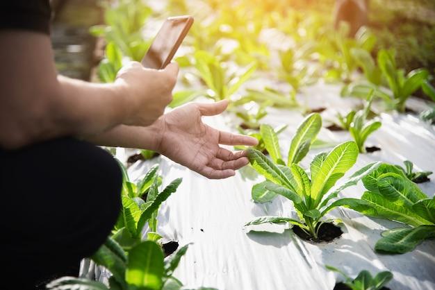 Rolny mężczyzna pracuje w jego organicznie sałaty ogródzie
