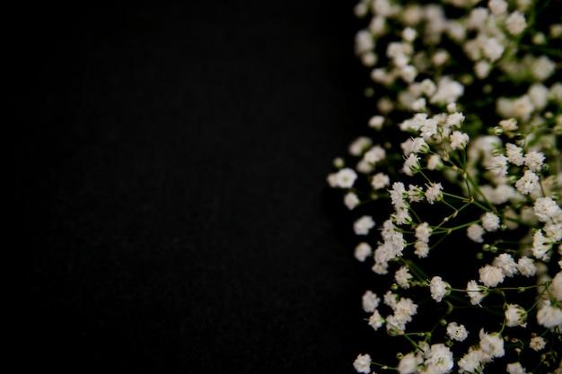 Romantyczna kompozycja kwiatów. białe kwiaty łyszczec na czarnym tle. walentynki, wielkanoc, urodziny, szczęśliwy dzień kobiet, dzień matki. widok z góry.