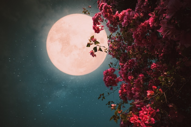 Romantyczna nocna scena, piękny różowy kwiat kwitną na nocnym niebie przy pełni księżyca., grafika w stylu retro z odcieniem rocznika.