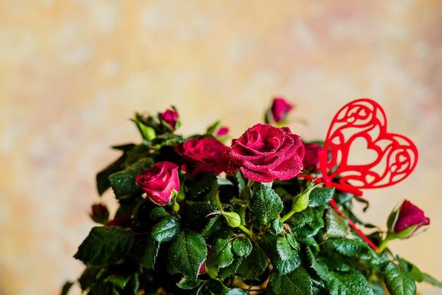 Romantyczne martwa natura, czerwone róże na białej drewnianej ścianie. koncepcja walentynki. miękka ostrość. piękne małe róże i czerwone serce jako dekoracja. kartka z życzeniami. skopiuj miejsce kwiaty w doniczce.
