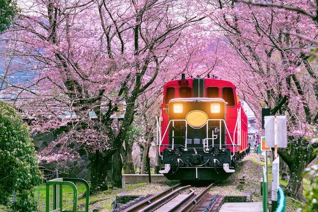 Romantyczny pociąg przejeżdża przez tunel kwitnącej wiśni w kioto w japonii.