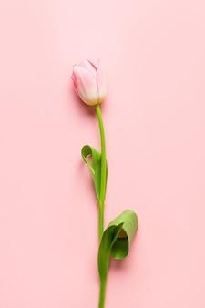 Romantyczny różowy tulipan. minimalna wiosna pionowa kartka z życzeniami.