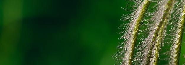 Rosa na kwiat trawy z zielonym rozmyciem tła