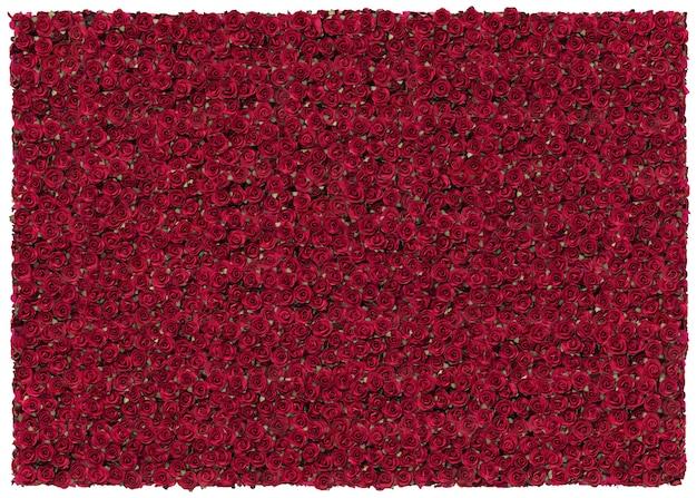 Rose red piękne tło. walentynki
