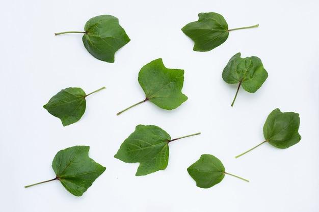 Roselle liście na białym tle na białej powierzchni