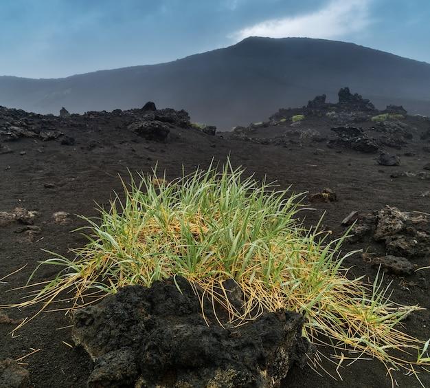Rosja, kamczatka. pola z czarnym piaskiem i wzgórza w rejonie wulkanu tołbaczik.