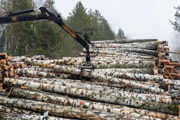 """Rosja, kazań - 1 marca 2021: ładowanie kłód brzozowych na pojazdy specjalne. świeżo posiekana brzoza. zbiór drewna w zimie. podpis: """"strefa niebezpieczna 20 m. nie stawaj pod ładunkiem"""""""