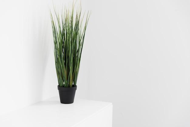 Roślin biurowych na szafce