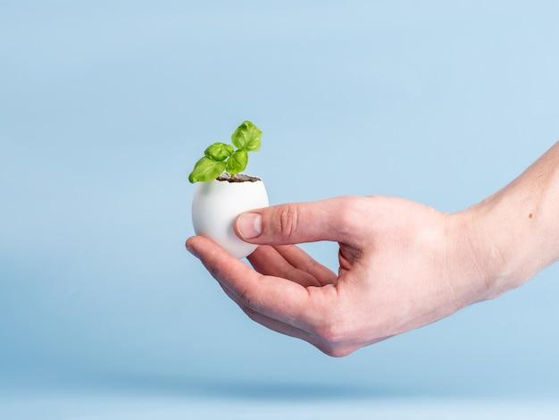 Roślin kiełkować w skorupce na niebieskim tle w dłoni mężczyzny. ekologiczny produkt organiczny, uprawa roślin.