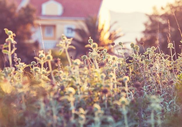 Roślin na łące w pobliżu domu