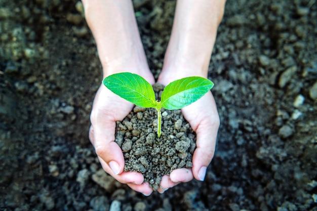 Roślin w rękach.