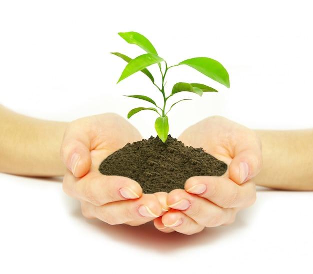 Roślin w rękach