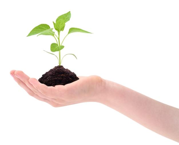 Roślin w ręku na białym tle