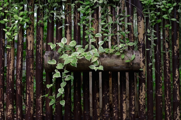 Roślina bluszczu ozdobiona bambusem w parku