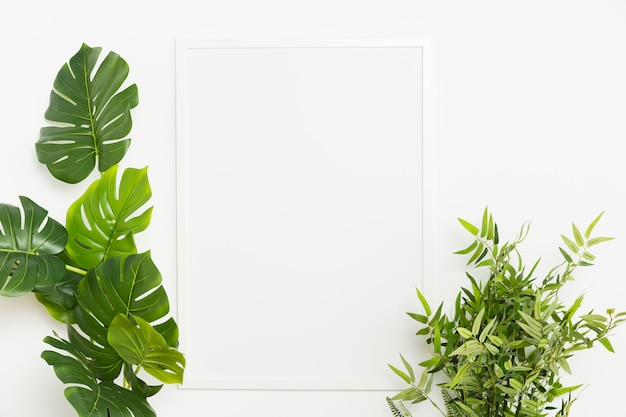 Roślina dekoracyjna z pustą ramką