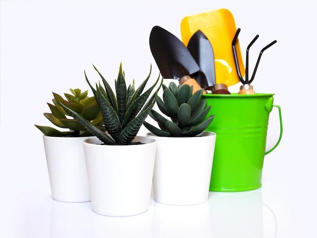Roślina domowa z kaktusem w doniczce i sprzęcie ogrodniczym lub narzędzia do uprawy